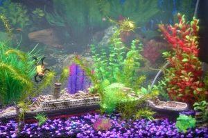 Las 9 mejores decoraciones de acuarios