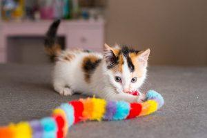 Los 10 mejores juguetes para gatos