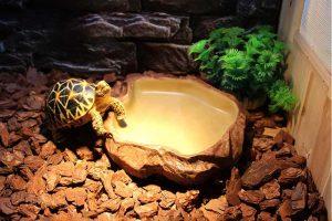 Los 10 mejores terrarios para tortugas