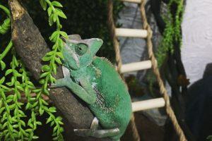 Los 6 mejores terrarios para iguanas y camaleones