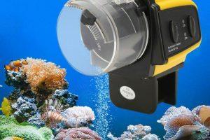 Los 9 mejores comederos automáticos para peces