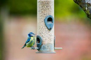 Los 9 mejores comederos para pájaros