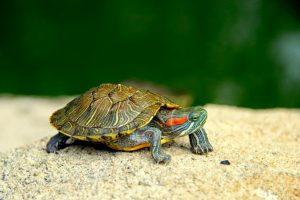 Las 9 mejores tortugueras grandes